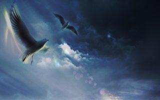 Dead Bird Omens: What Does a Dead bird Symbolize | According to Spirituality