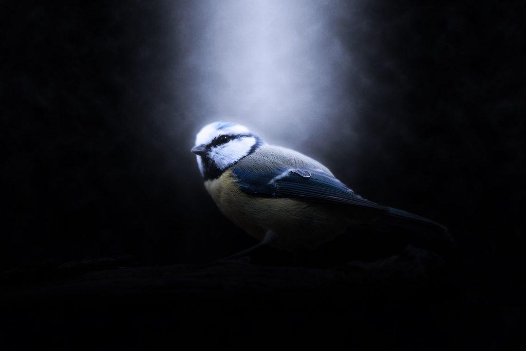 dead bird omes