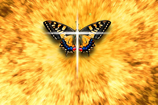 dead butterfly spiritual meaning and omens