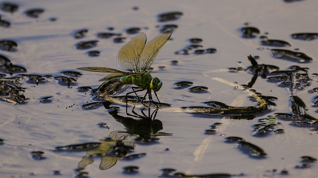 associations of Dragonfly with Death water