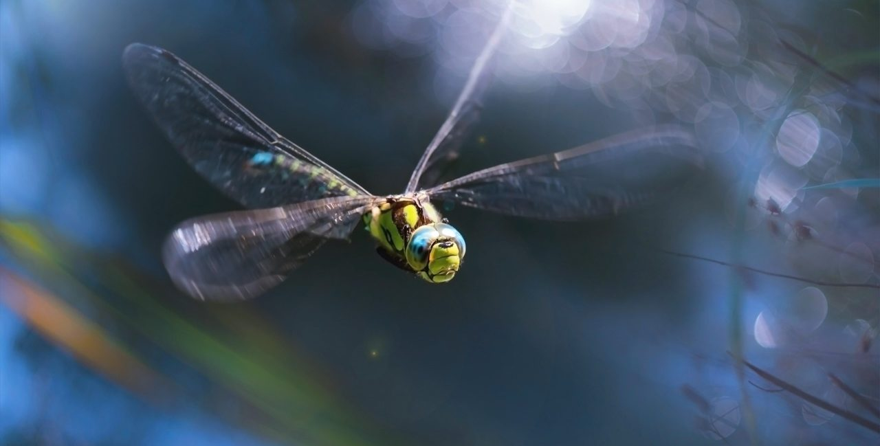 The Connection Between Dragonfly and Death | Various Spiritual Meanings and Beliefs